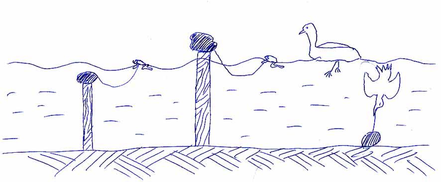 Как поймать дикую утку своими руками